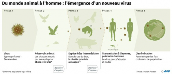 Source : https://www.rtl.be/info/magazine/science-nature/coronavirus-trouver-l-animal-coupable-un-jeu-du-chat-et-de-la-souris-1194479.aspx